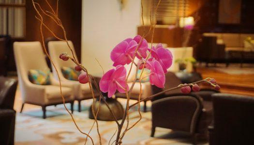 Experiencia • JW Marriott Mexico City: un hotel de lujo clásico con servicio preferencial